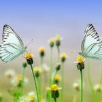 The Butterfly Project: A chance to give back